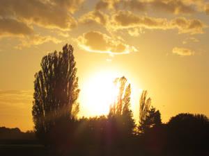 Shining sunset