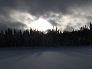 Sunny winter in sweden