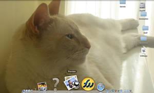 Desktop of kitteh