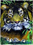tiger No 3 - oil pastels