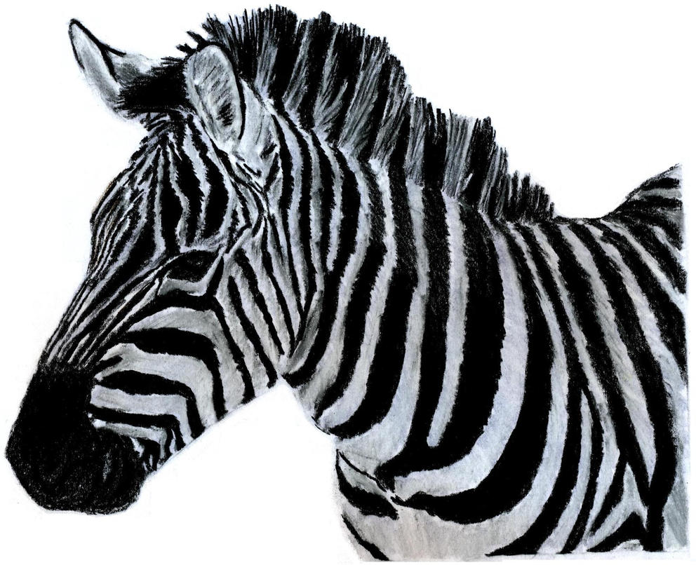 zebra drawing - photo #21