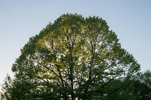 Ordinary tree by Armaga10