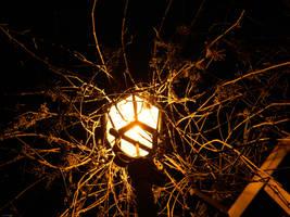 nightlightgrapes by InsomnianFae