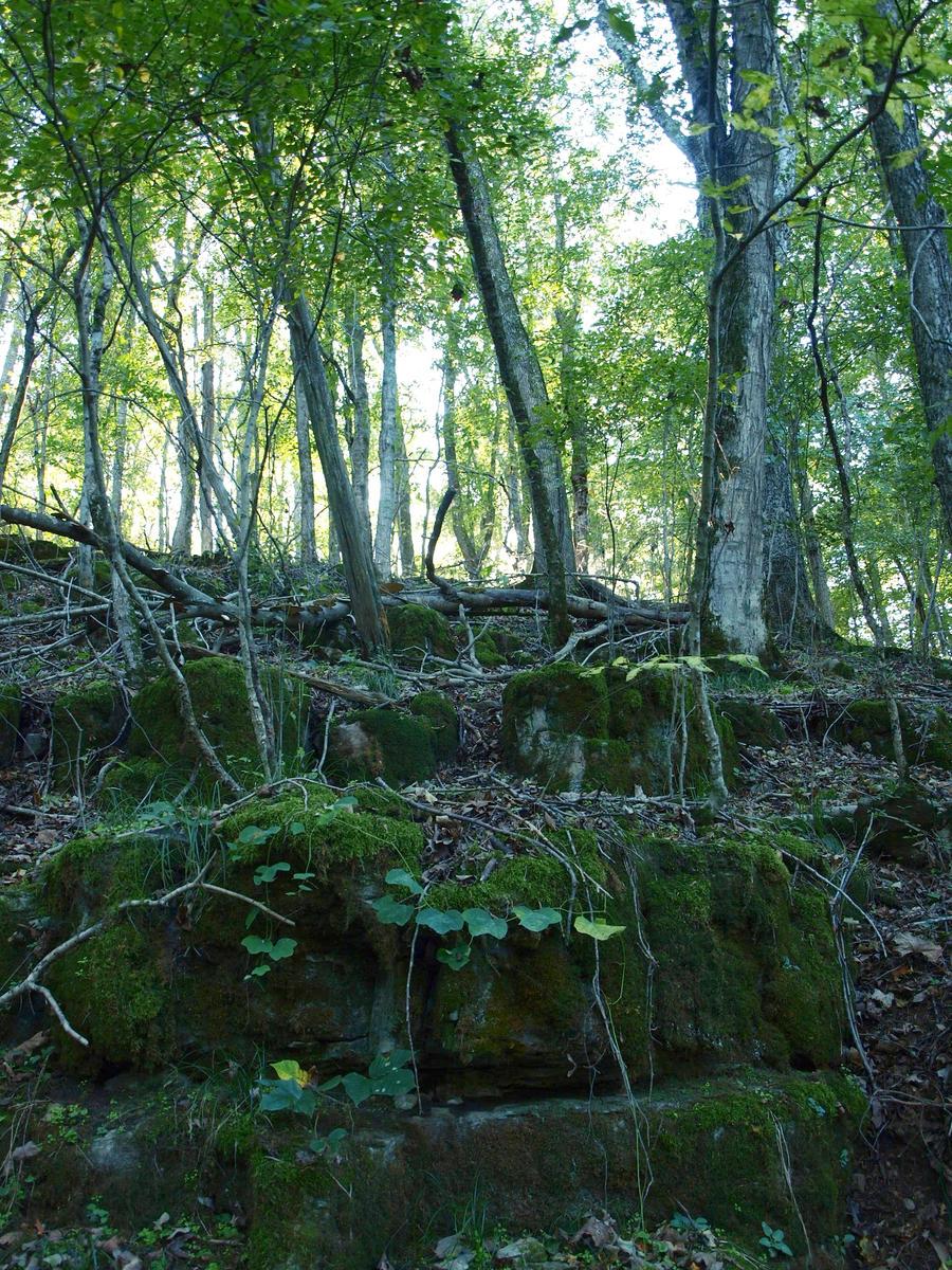 StoneForest by JappasStickyStock