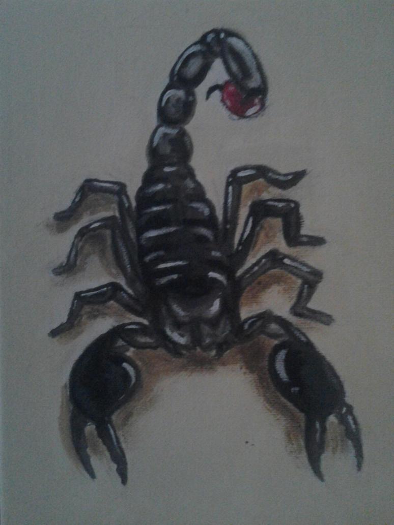 Emperor Scorpion by joelhauser on DeviantArt