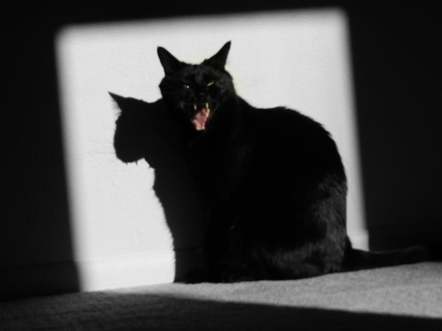 Mini Jungle Cat by Dark-Sapphire-Lotus