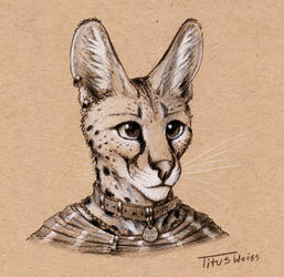 Toned Paper Serval by TitusWeiss