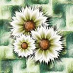 Three Sisters-Parameters