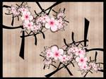 Cherry Blooms