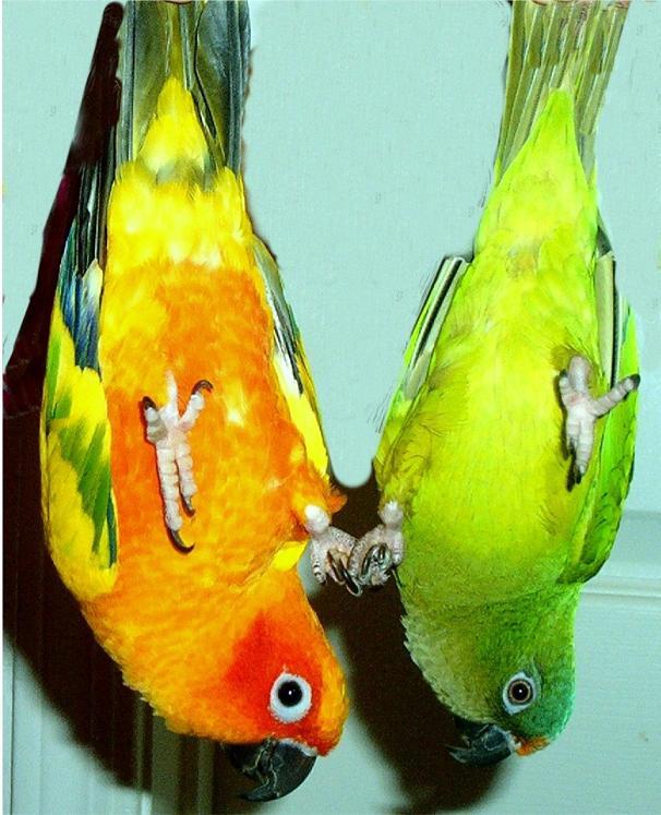 birds by Akira-Kamegaki