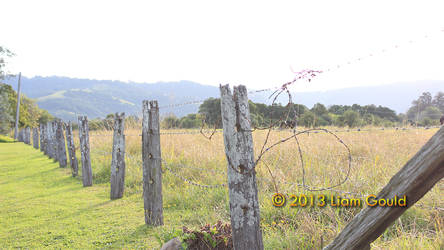 Country Fenceline