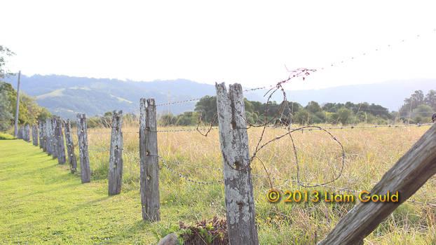 Country Fenceline