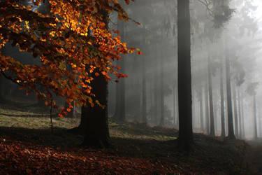 Foggy Morning by PassionAndTheCamera