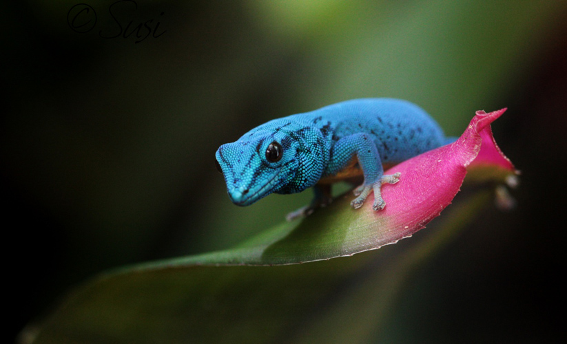 Gecko by PassionAndTheCamera