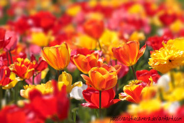 The Colours of Spring by PassionAndTheCamera