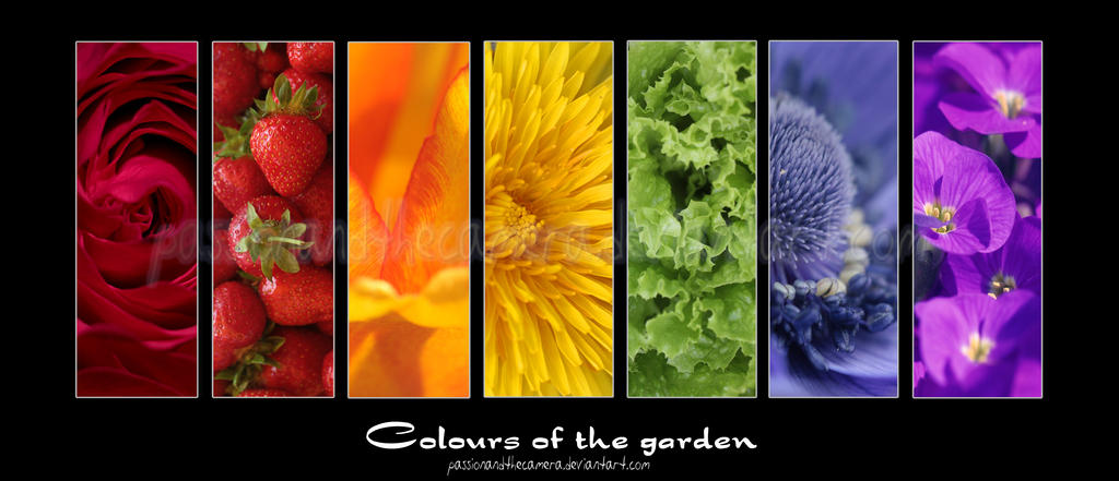 Colours of the garden by PassionAndTheCamera