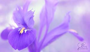 Purple Dream by PassionAndTheCamera