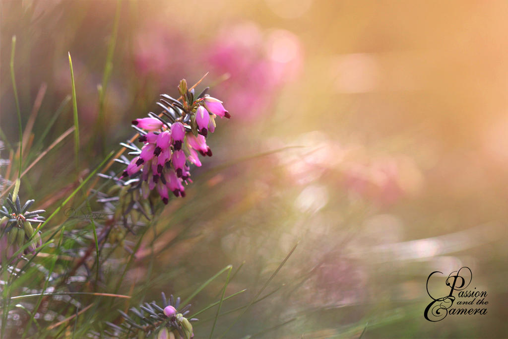 Magical Afternoon Sunlight by PassionAndTheCamera