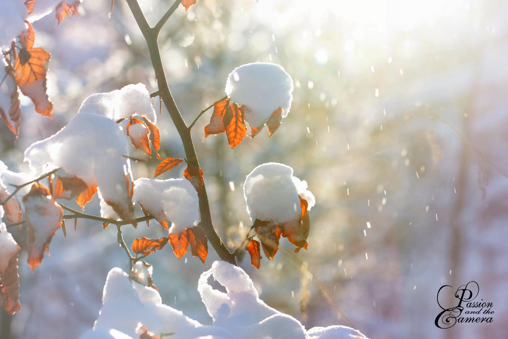 Winter Wonderland by PassionAndTheCamera