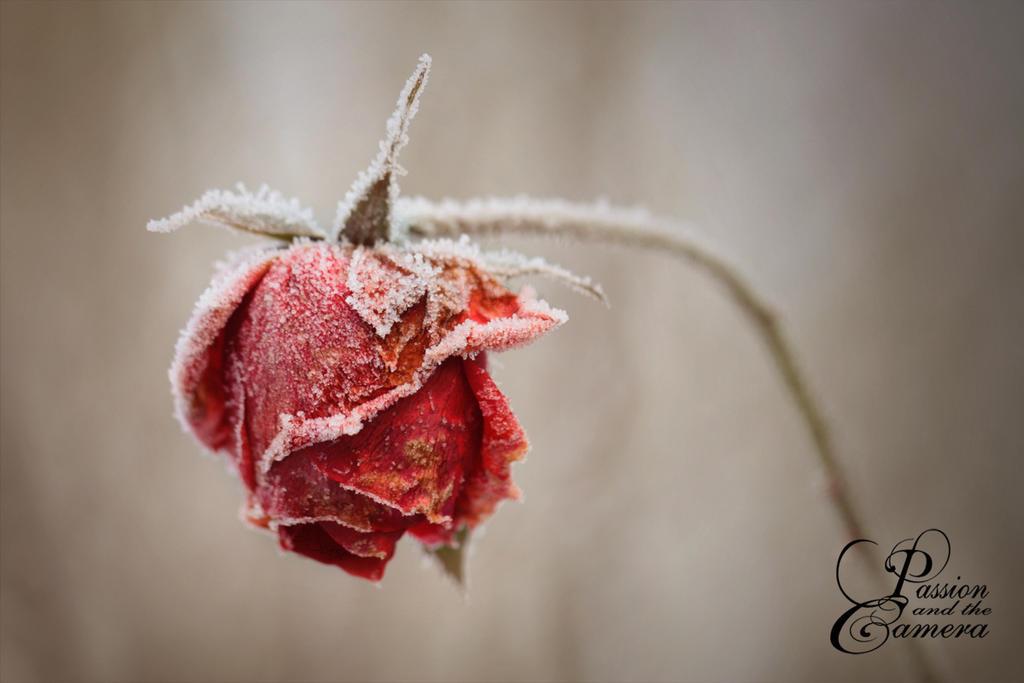 Leblos by PassionAndTheCamera