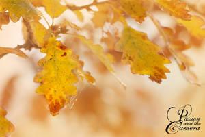 Golden November by PassionAndTheCamera