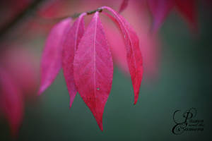 Autumn Red by PassionAndTheCamera