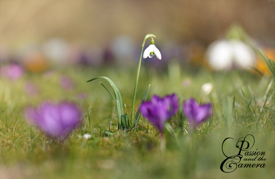 Spring by PassionAndTheCamera