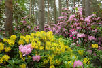 Rhododendron Paradise