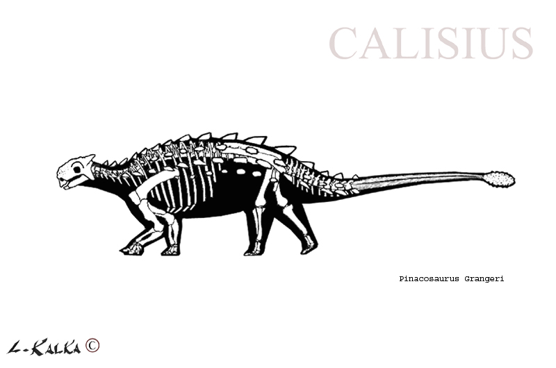 pinacosaurus skeletal rec. by Calisius