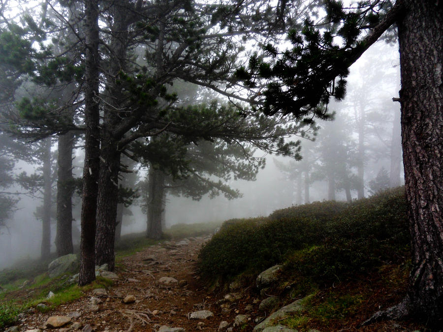 Fog Path by Utgardar