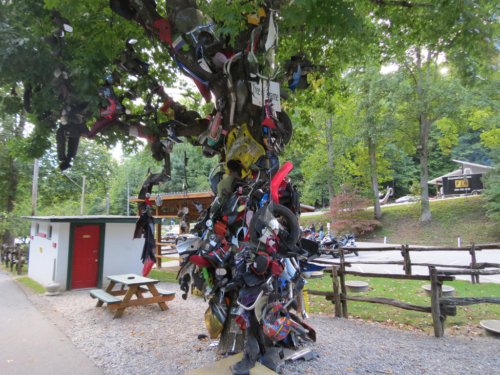 The Tree Of Shame At Deals Gap By Rufus Tgap On Deviantart