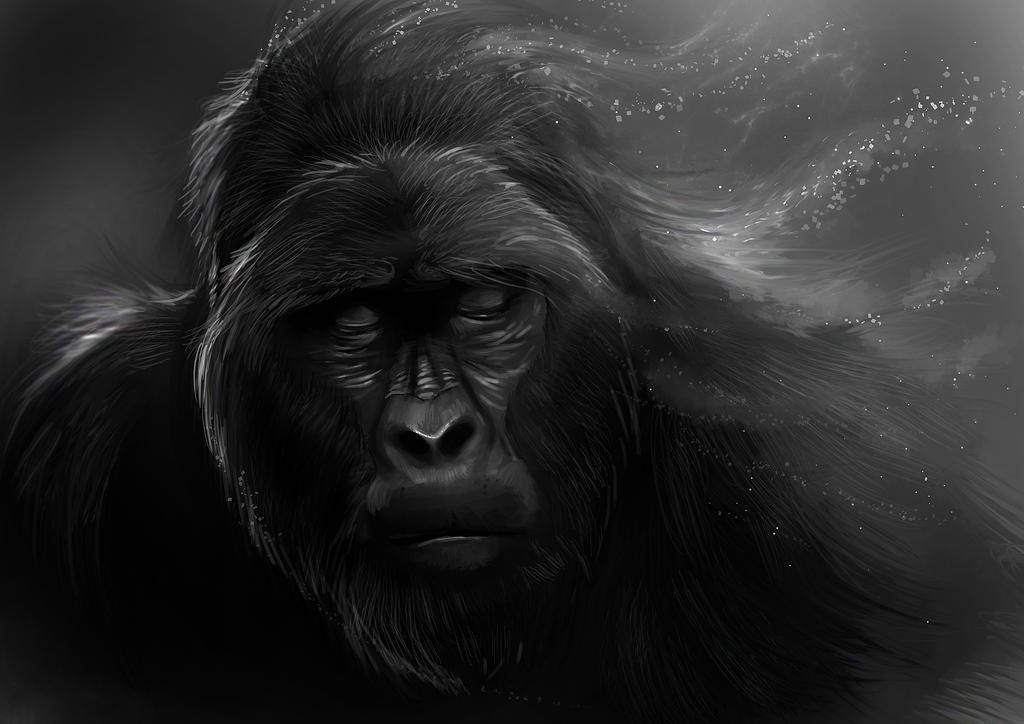 Bestiaire Old_gorilla_by_delun-d4hy8o5