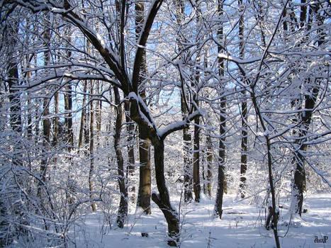Snowy Trees in Salzburg, pt 2
