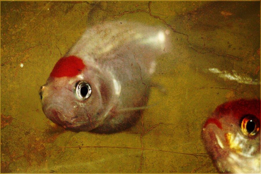 Fishy II