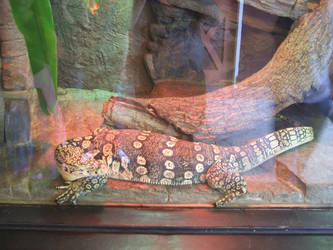 Monitor Lizard by SuperMarioSuperStar