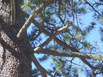 Woodpecker Tree by SuperMarioSuperStar