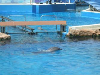 Dolphins by SuperMarioSuperStar
