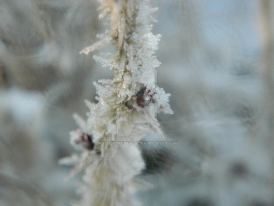 When Winter Takes Oer by KayleighBPhotography