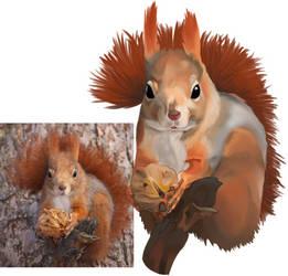 Squirrel Study 2