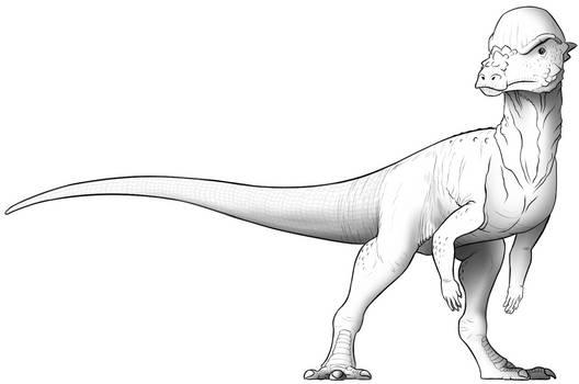 Pachycephalosaurus Study