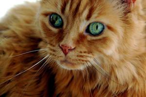 green eyes by hennatea
