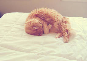sleepy cassy by hennatea