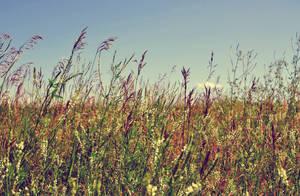 August Heat by hennatea