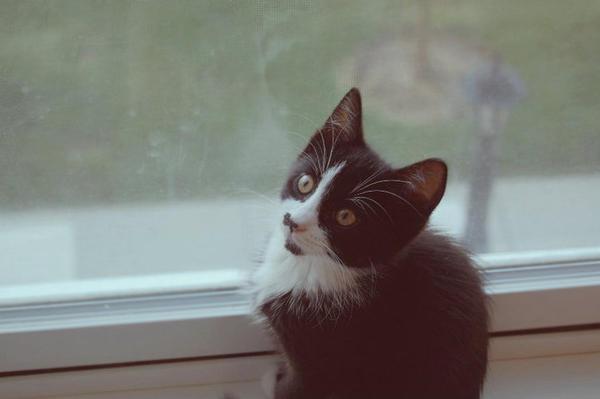 Itty Bitty Kitty by hennatea