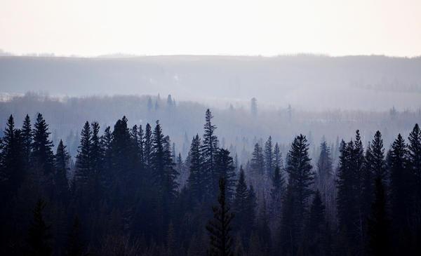 Foggy Forest by hennatea