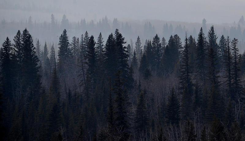 Dark Forest Tumblr Background | www.imgkid.com - The Image ...