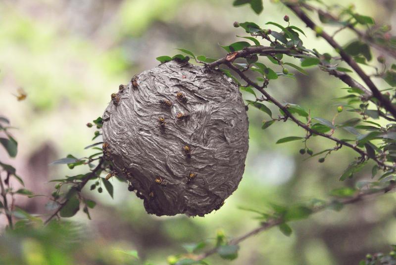 wild wasp nest by hennatea on deviantart. Black Bedroom Furniture Sets. Home Design Ideas