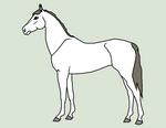 Equine Line Art