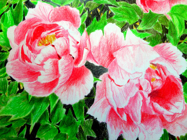 Pink Peonies by Fairywater