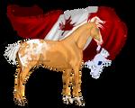 Horse Hetalia:  Canada